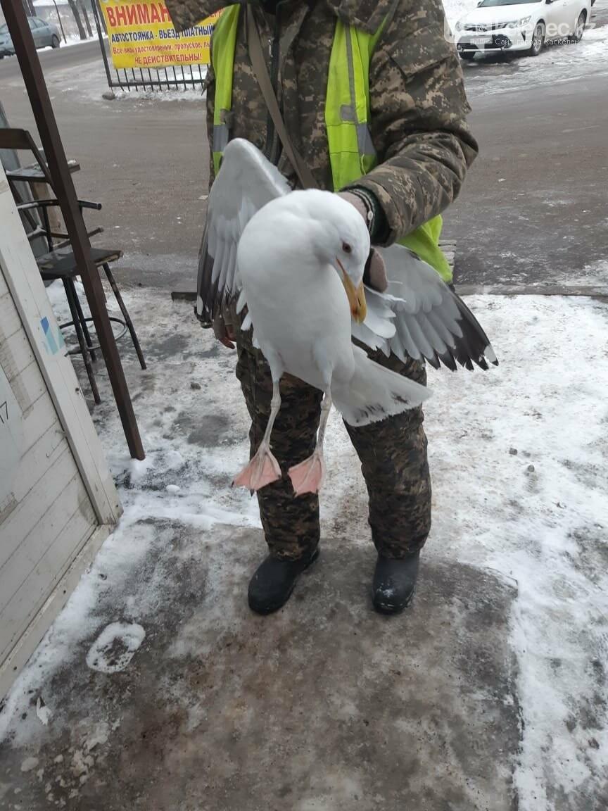 На алматинском рынке «Барлык» разбилась огромная чайка: очевидцы просят помощи, фото-1