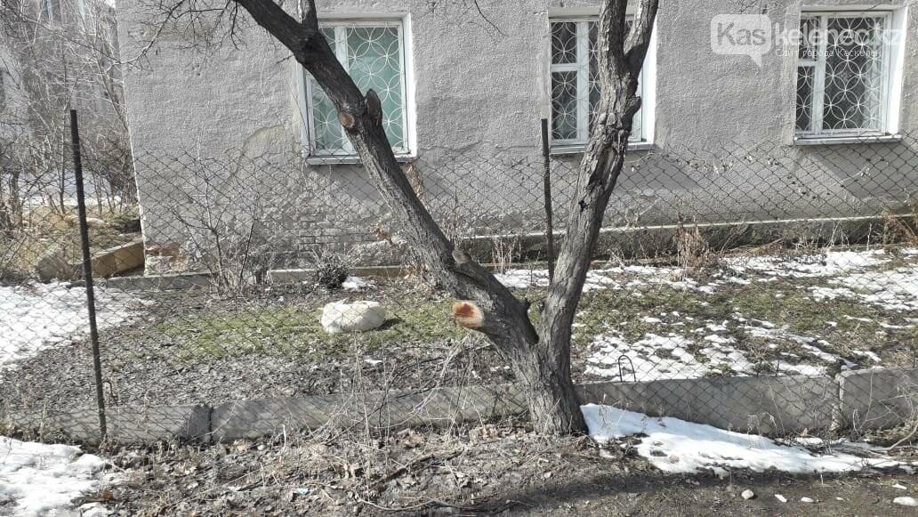 Бродячие собаки нападают на людей в Каскелене: ветеринарная служба не справляется с заявками, фото-3