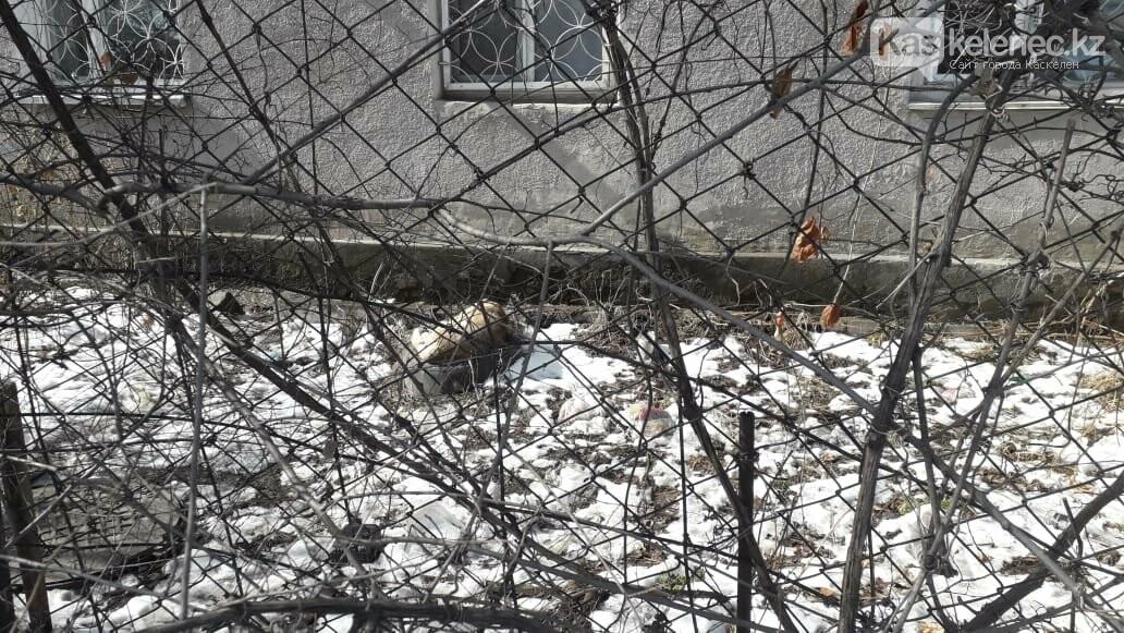Бродячие собаки нападают на людей в Каскелене: ветеринарная служба не справляется с заявками, фото-2