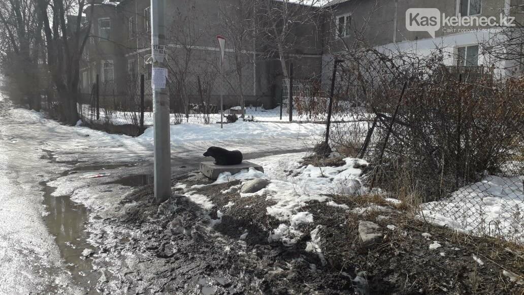 Бродячие собаки нападают на людей в Каскелене: ветеринарная служба не справляется с заявками, фото-1