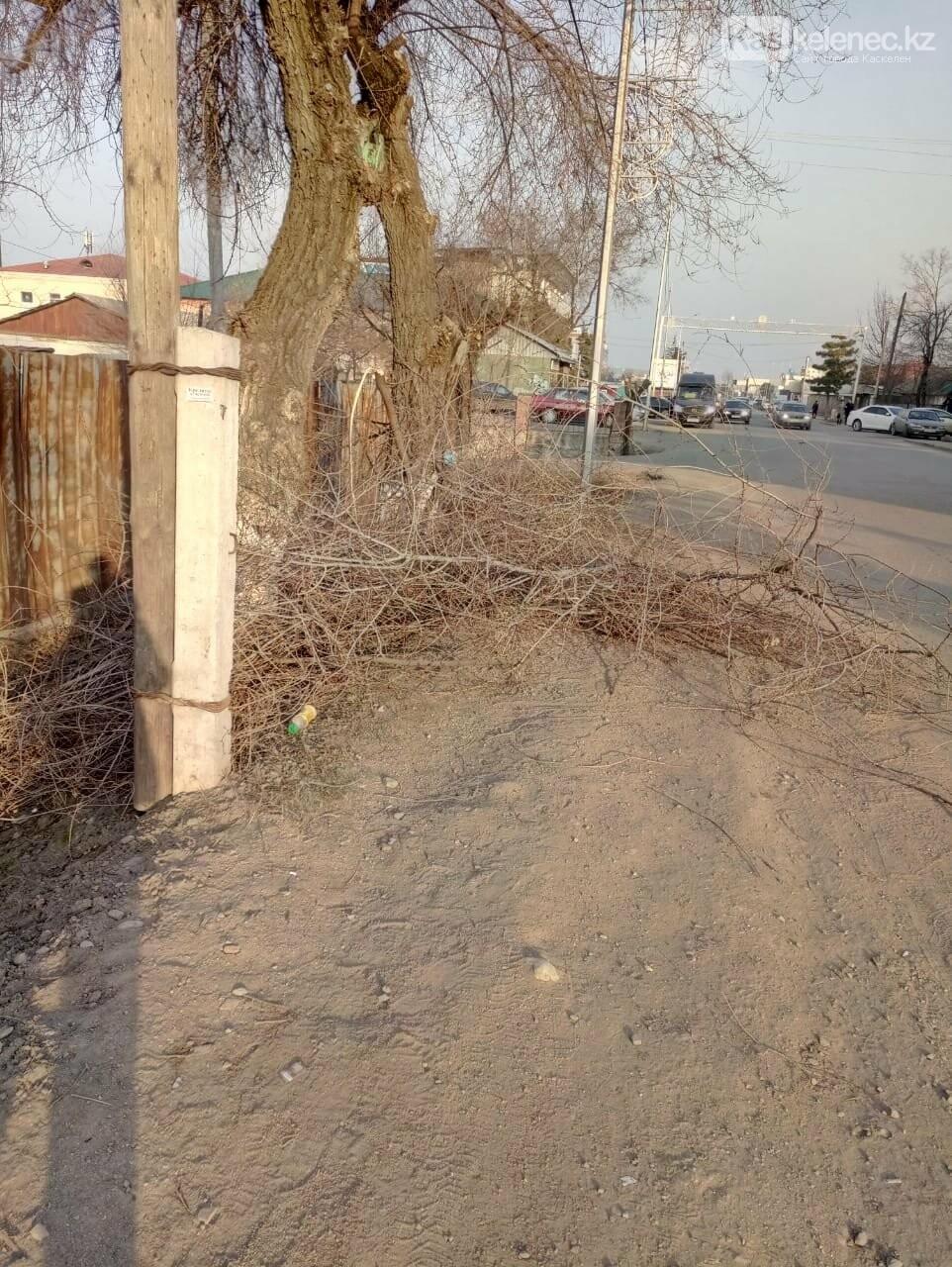 Пилят деревья и оставляют на месте: как работают коммунальщики на центральной улице Каскелена, фото-3