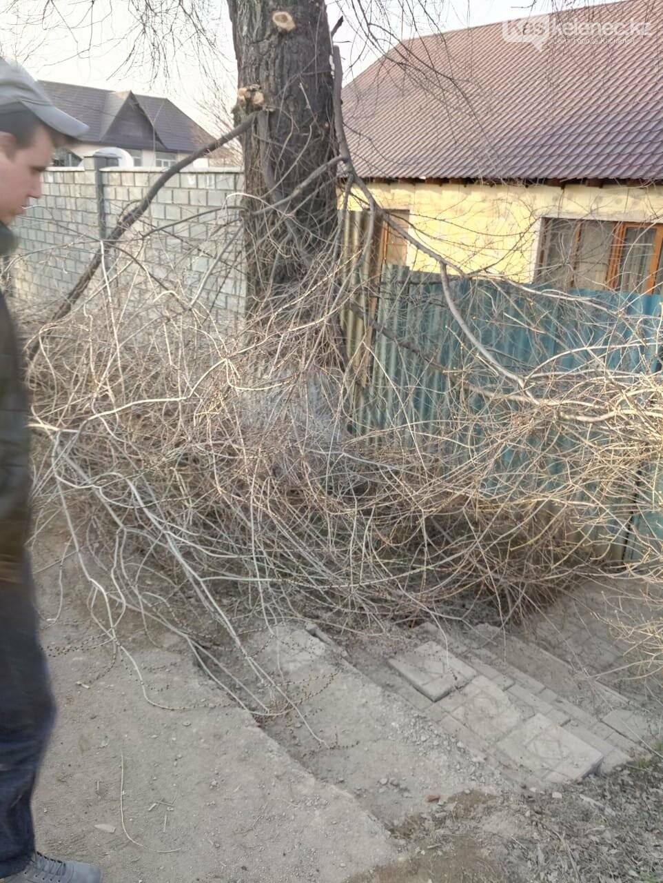 Пилят деревья и оставляют на месте: как работают коммунальщики на центральной улице Каскелена, фото-4