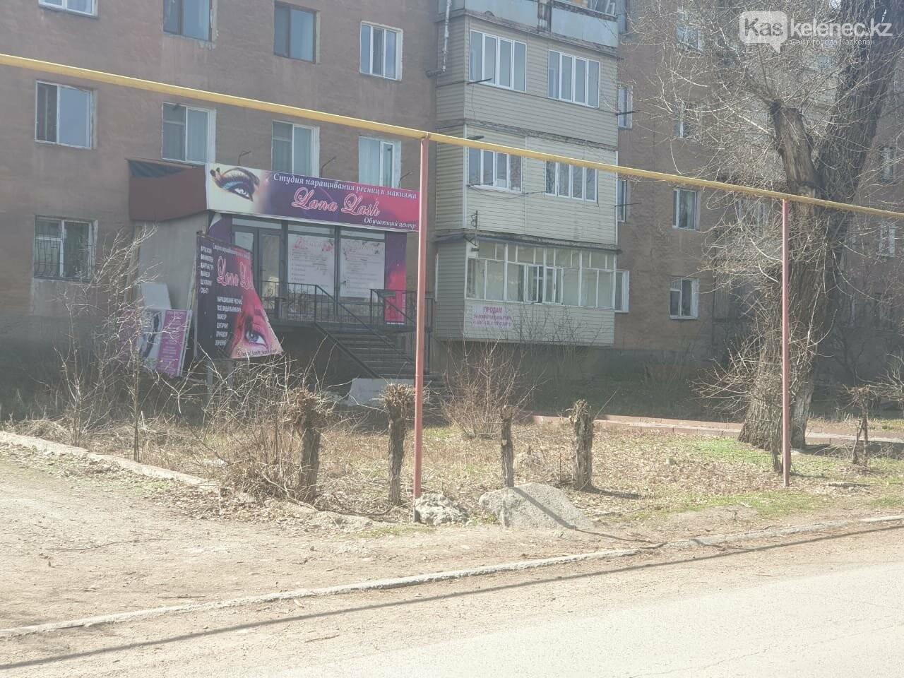 Незеленый Каскелен: почему в городе пилят деревья, фото-13