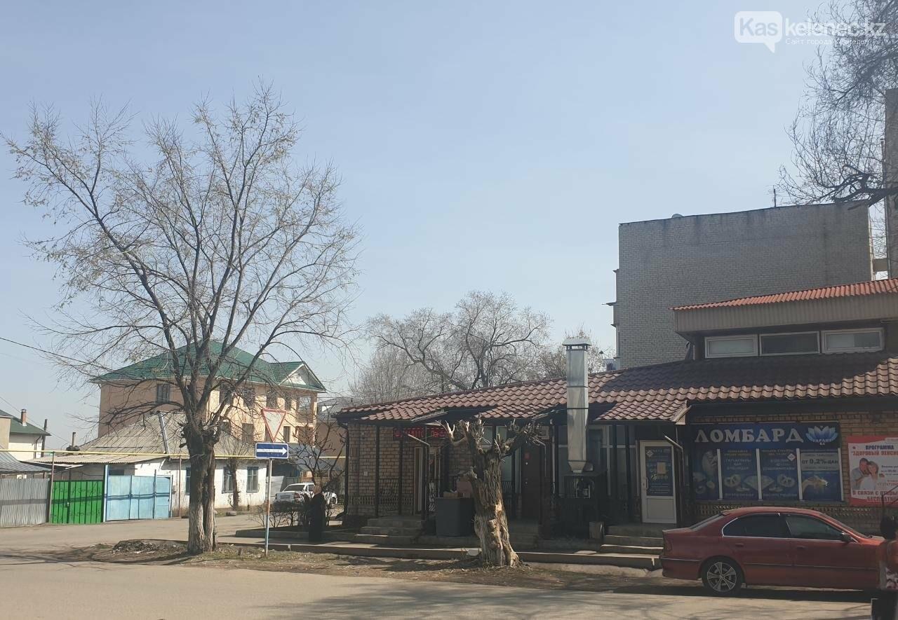Незеленый Каскелен: почему в городе пилят деревья, фото-2