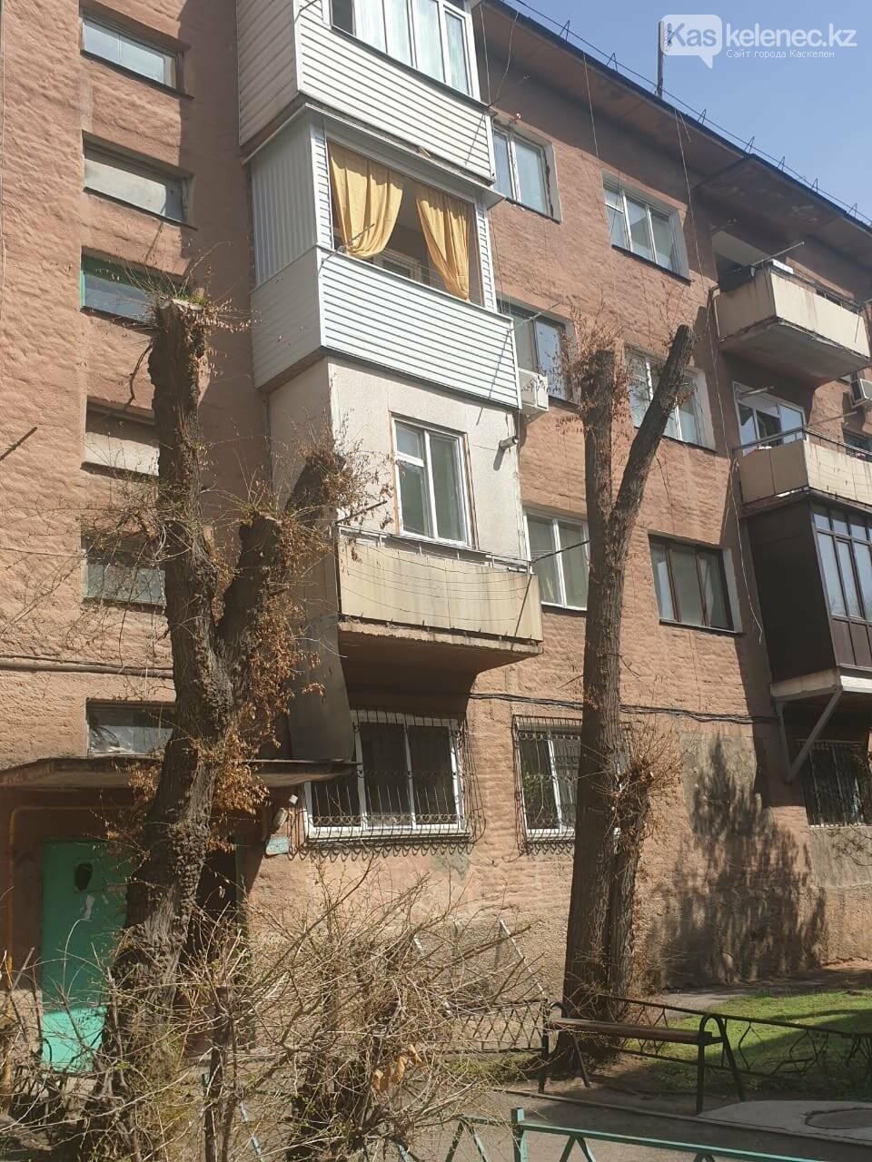 Незеленый Каскелен: почему в городе пилят деревья, фото-3