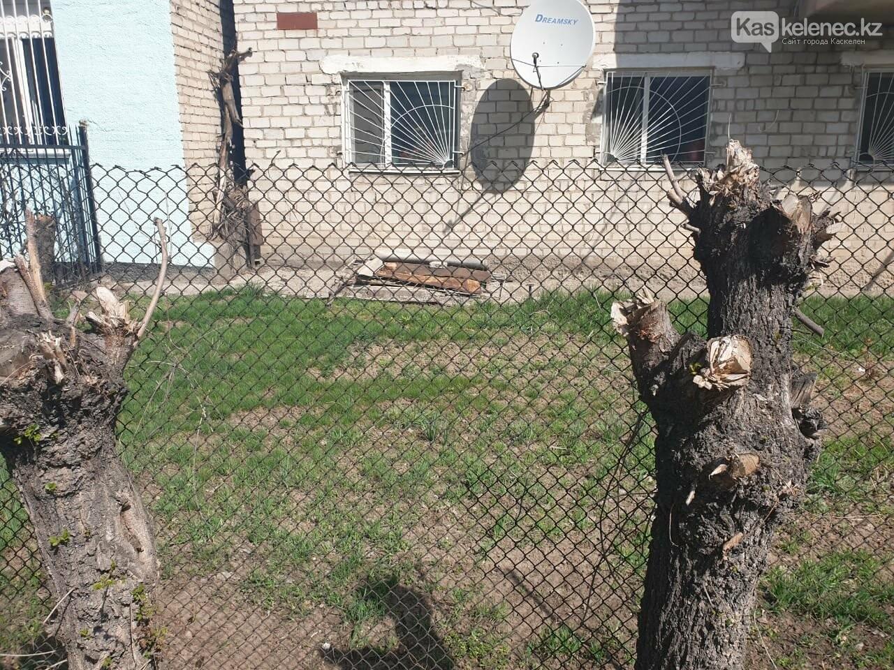 Незеленый Каскелен: почему в городе пилят деревья, фото-5