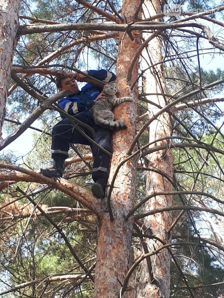 Аким Каскелена спас кота, который несколько дней провел на дереве, фото-1