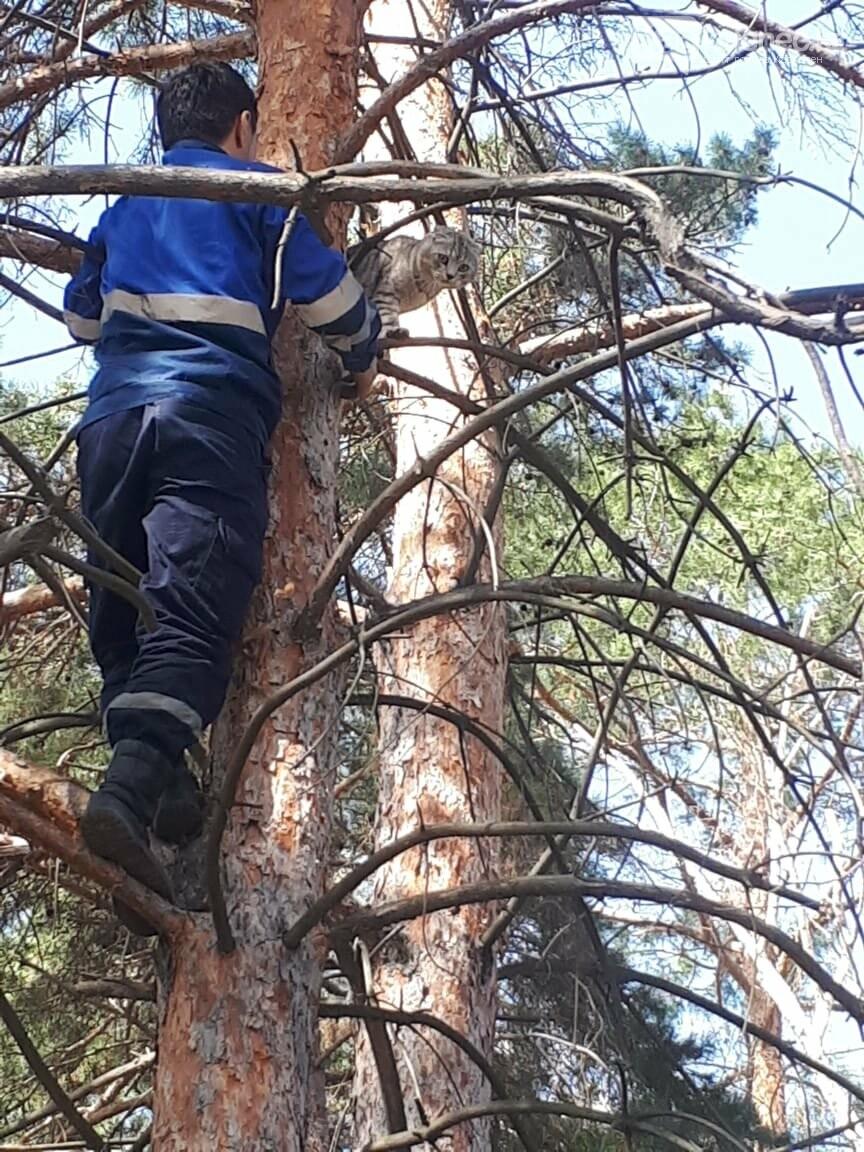 Аким Каскелена спас кота, который несколько дней провел на дереве, фото-2