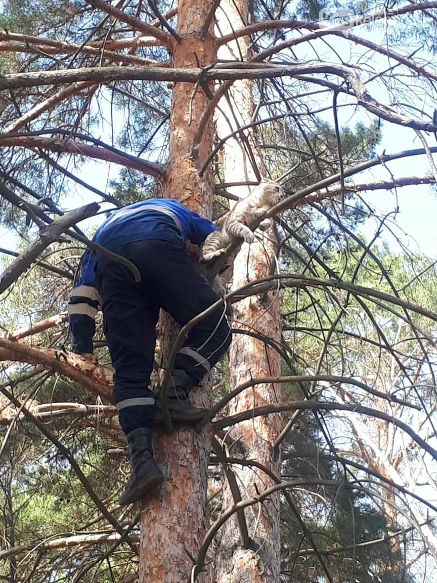 Аким Каскелена спас кота, который несколько дней провел на дереве, фото-3