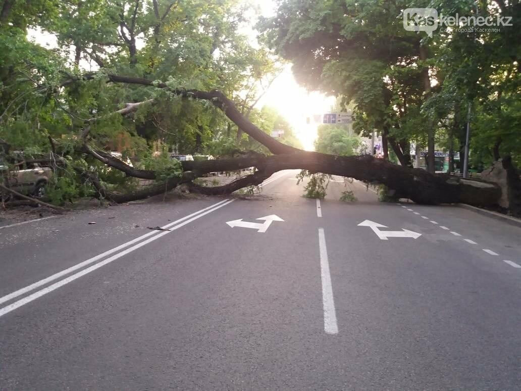Упавшее дерево придавило два автомобиля в Алматы, фото-1