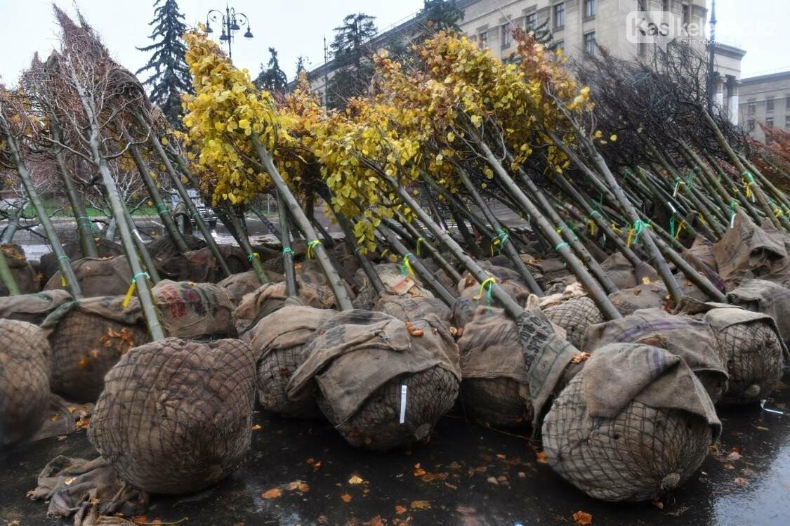 На улице Панфилова в Алматы пересадят деревья: новые саженцы не прижились, фото-2